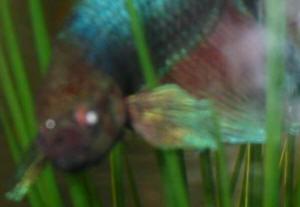 Bettahlthf24 for Fish antibiotics petco