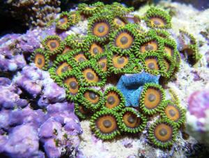 Coral aorta teaser 5 - 3 part 10
