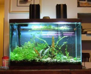 10x Simulation Bushes Model diy Grass Aquarium Water Tank Aquarium Decoration sp